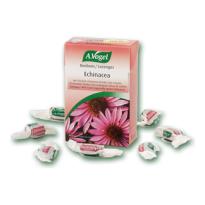 Echinacea Bonboni